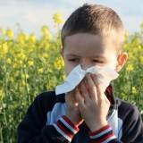 allergie pollini polvere muffe